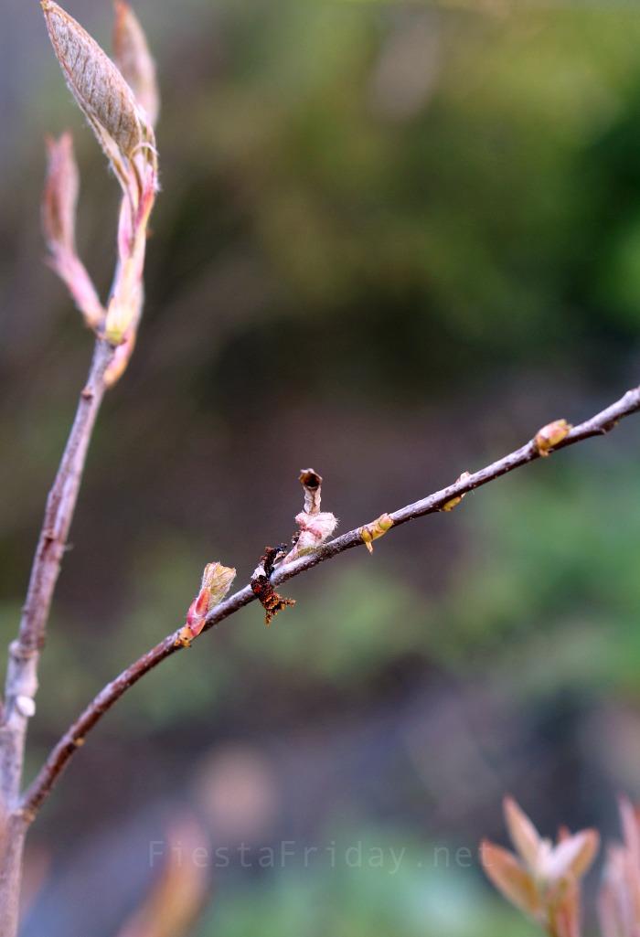 A Caterpillar and its hibernaculum | FiestaFriday.net