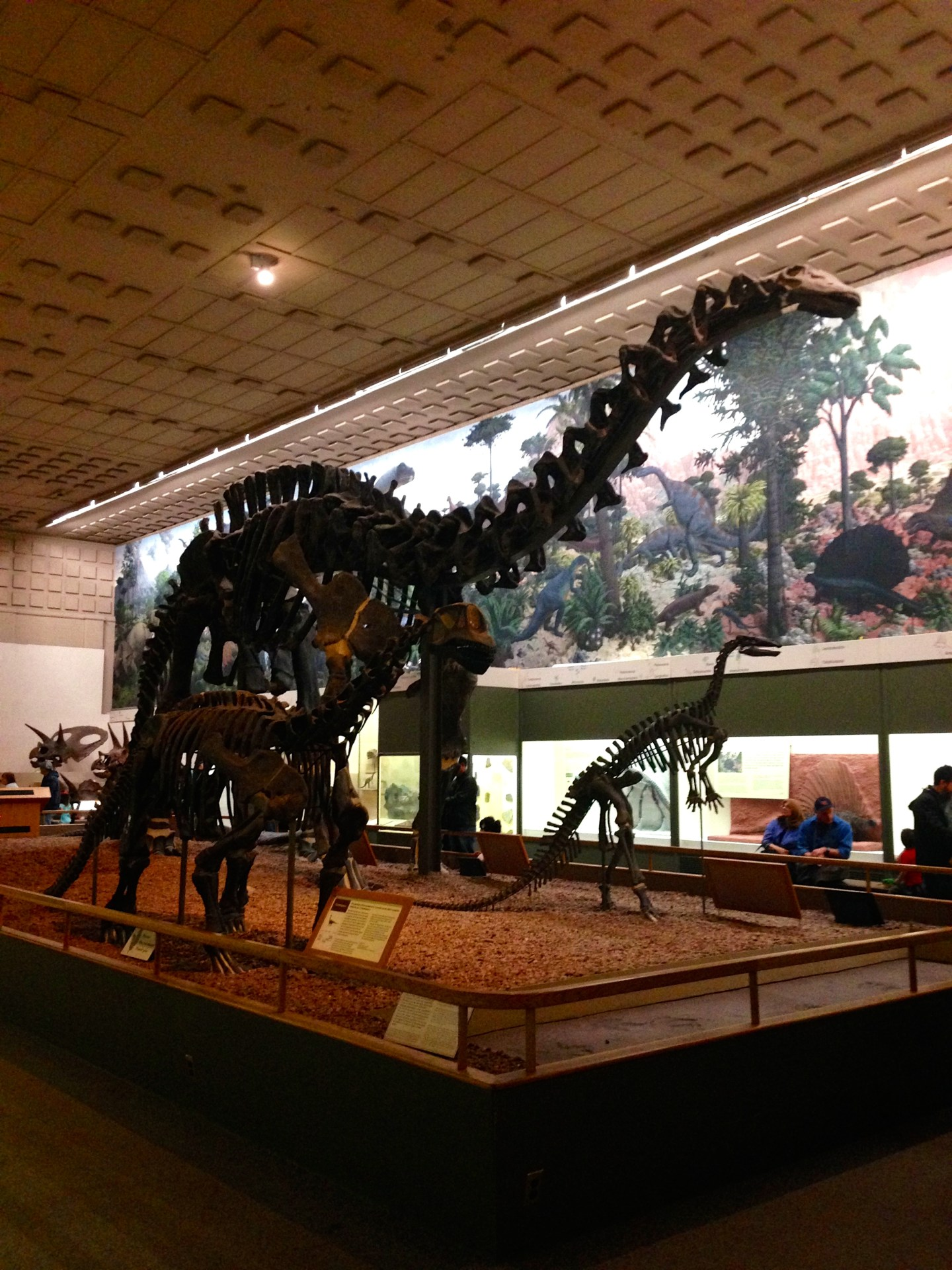 Museum of Natural History – in CT