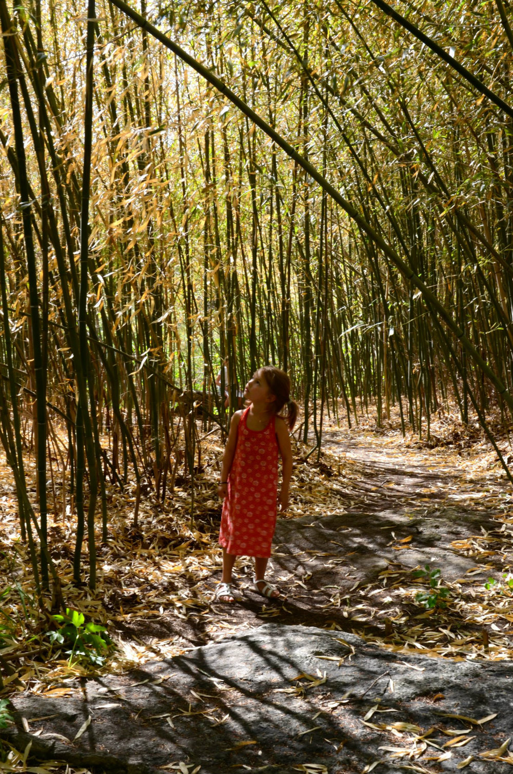 Walking through a bamboo forest in Cold Spring, NY.