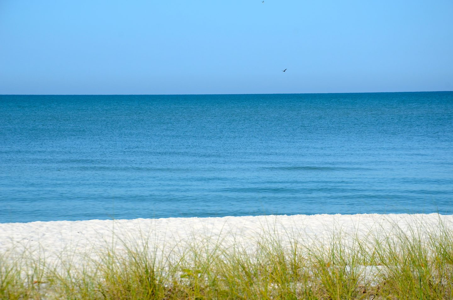 Top Things to See and Do with Kids in Naples, FL