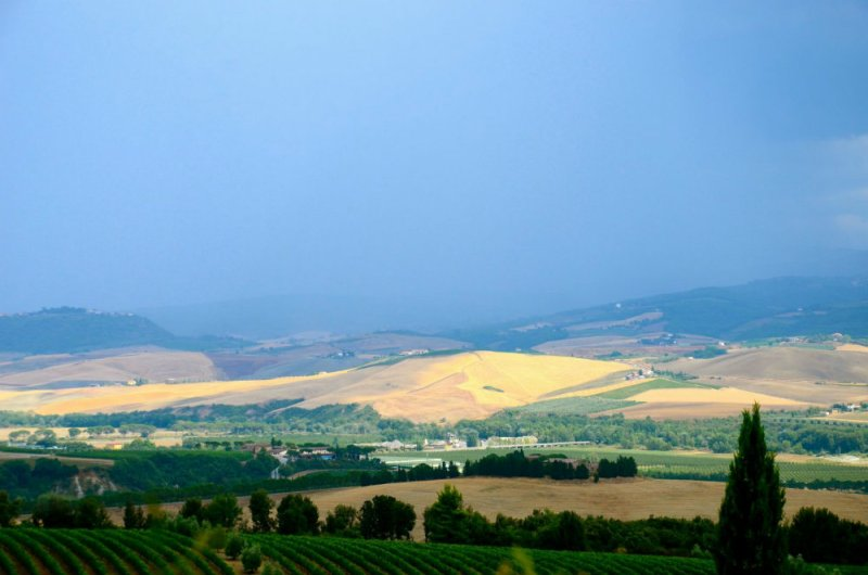 View of the Tuscan countryside at Tuscan winery Banfi