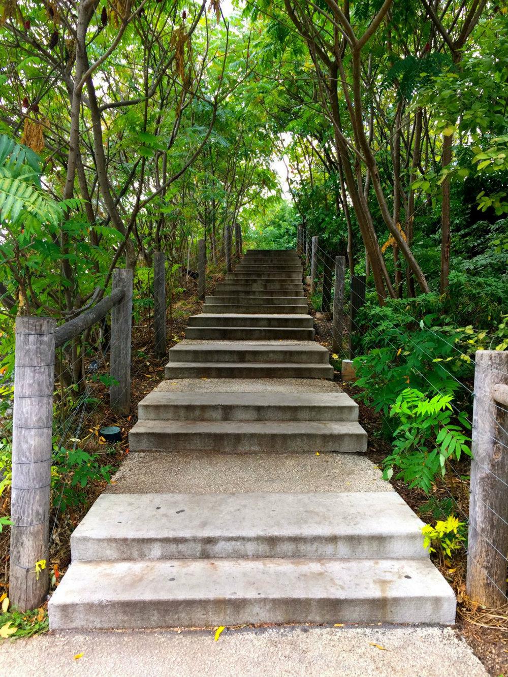 Stairway in the trees in Brooklyn Bridge Park.