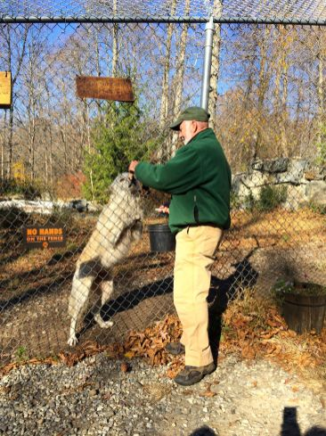 wolf-conservation-center-IMG_7064