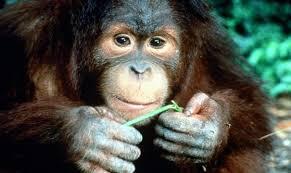 Miami kids monkey jungle