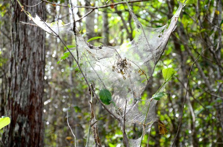 spider-web-corkscrew-DSC_5592