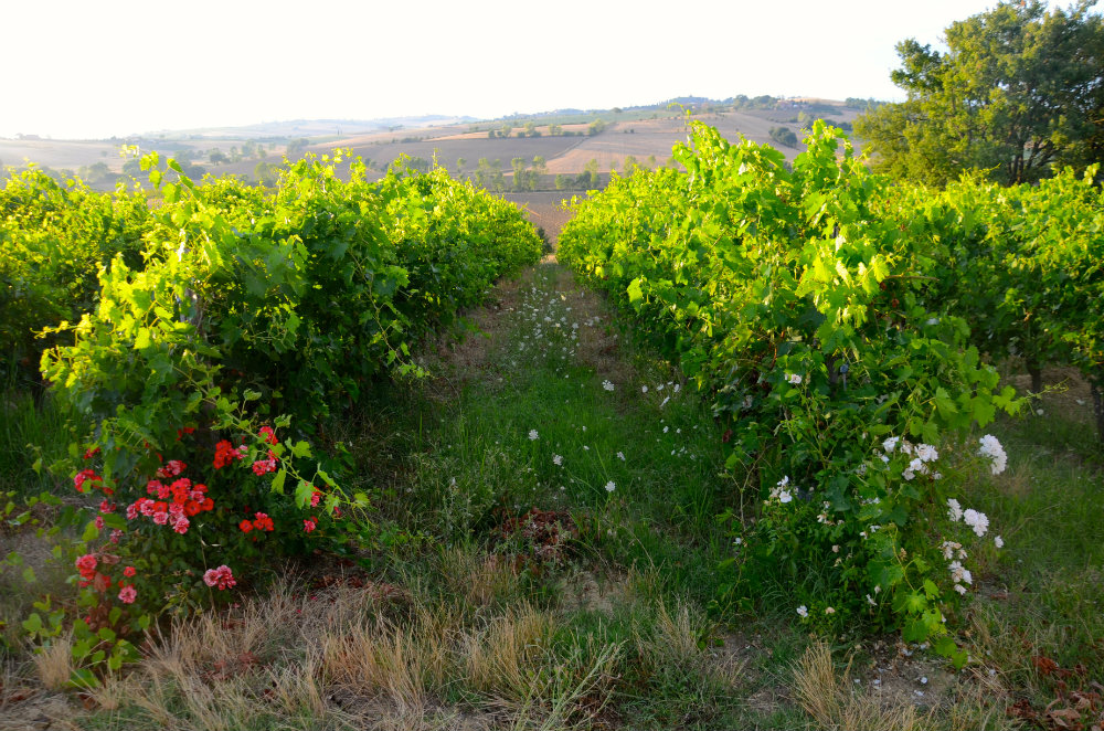 Wine tasting with kids in Tuscany