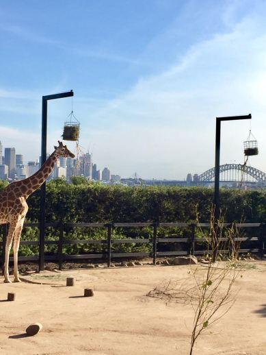 Taronga-zoo-Australia-