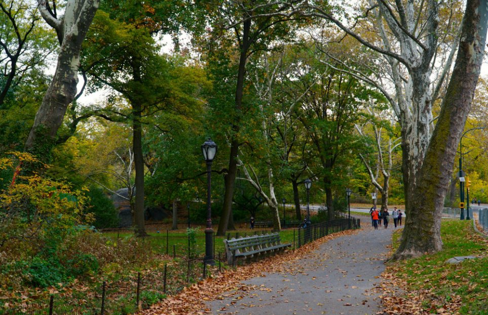 fall-walk-central-park-new-york-city-