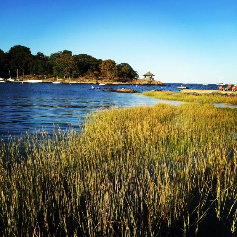 Seagrass and Long Island Sound in Larchmont, NY, Life in Larchmont