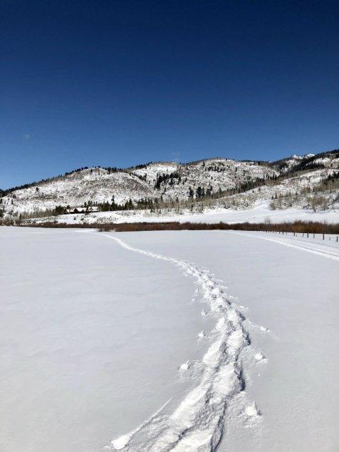 Steamboat-Springs-snowshoe-tracks