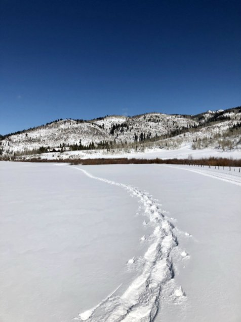 Steamboat-Springs-snowshoe-tracks