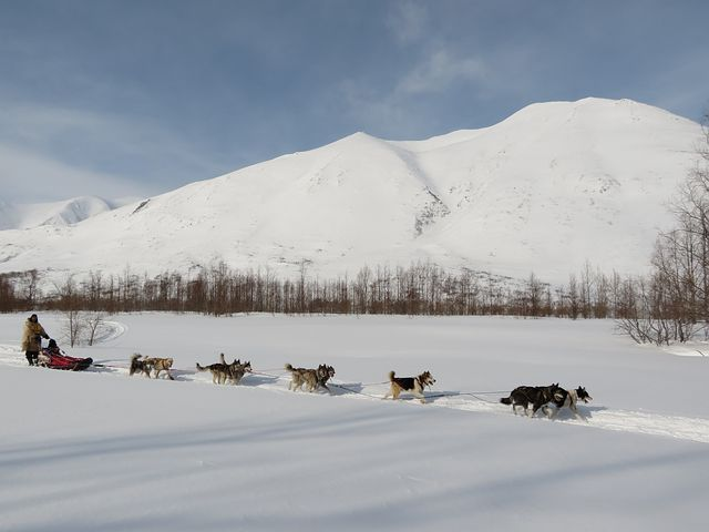 Dog sledding is one of the activities to do in Steamboat Springs, CO besides skiing