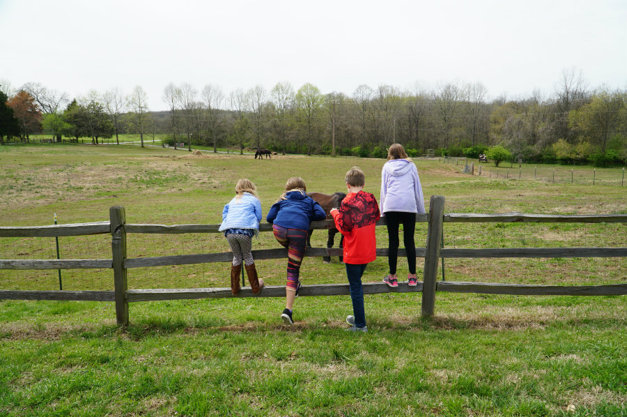 Watching the horses at the Hermitage in Nashville, TN