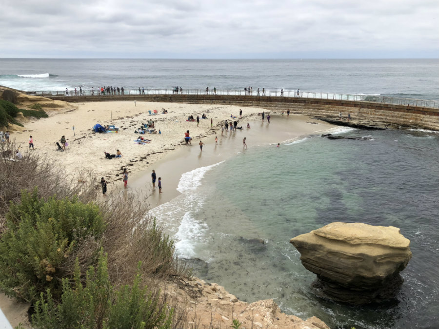 Things to do in La Jolla, Children's Beach