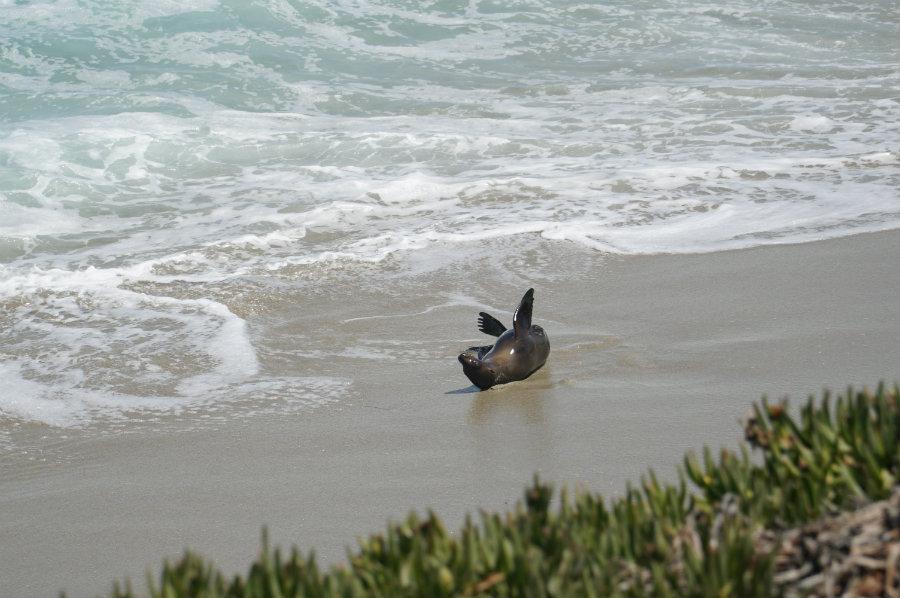 Seal watching in La Jolla, CA