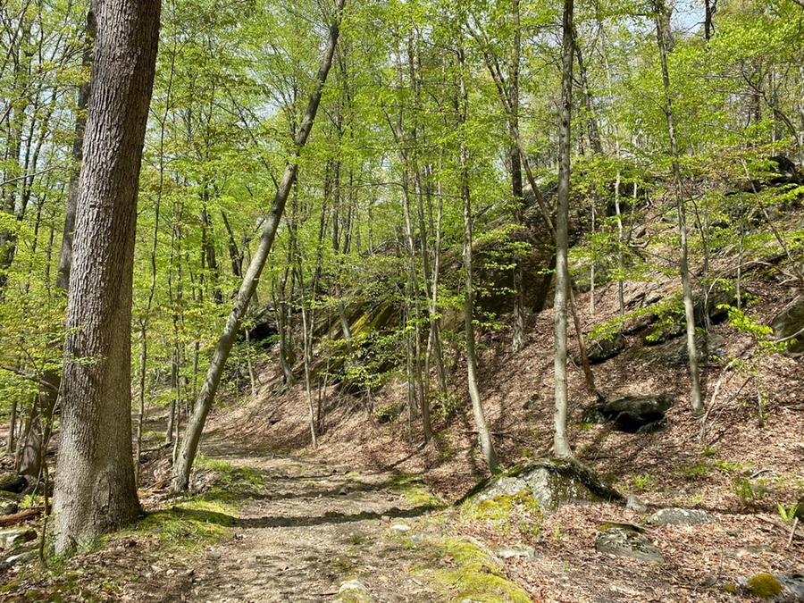 Hiking in Blue Mountain Preservation Westchester