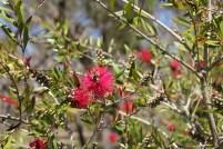 Native Garden 03