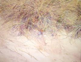 Dune Grasses Spartina transparent watercolor