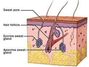 Don't Sweat It… Try Botox! | fifty shades of beauty blog