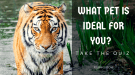 what pet is ideal for you quiz