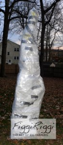 Fig tree insulated with water heater insulation and clear mattress bag.