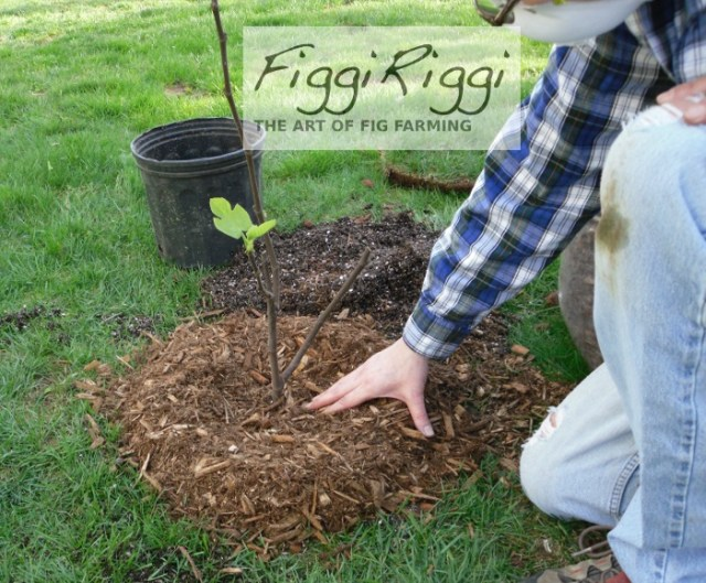 Shaping the mulch