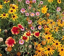 a photo of wildflowers