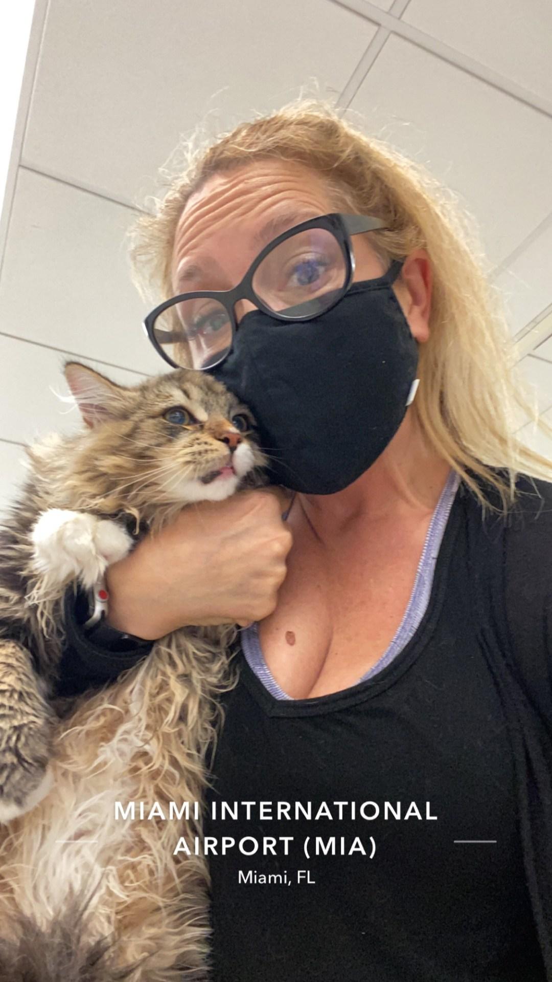 Ground Transport Cat From Miami to Orlando