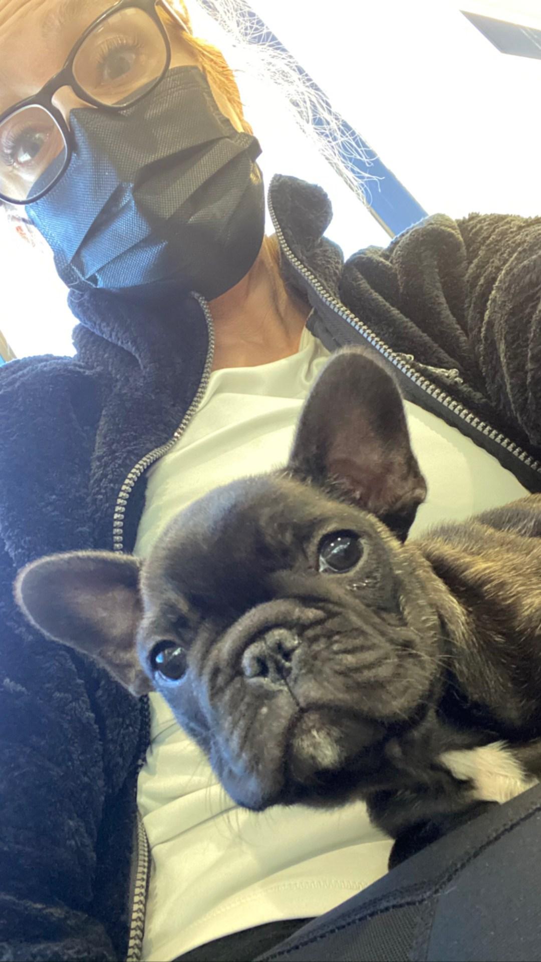 Flight Pet Nanny transporting a french bulldog puppy