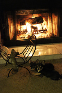 Beamer and Tipsy cuddled up by the fire