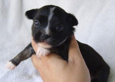 Kiki - 3 weeks old - Weight 1 lb 1 1/2 ozs