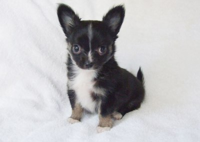 Kiki - 8 weeks old - Weight 1 lb 10 3/4 ozs