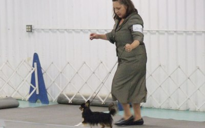 Welcoming You to the World of Showing Dogs!