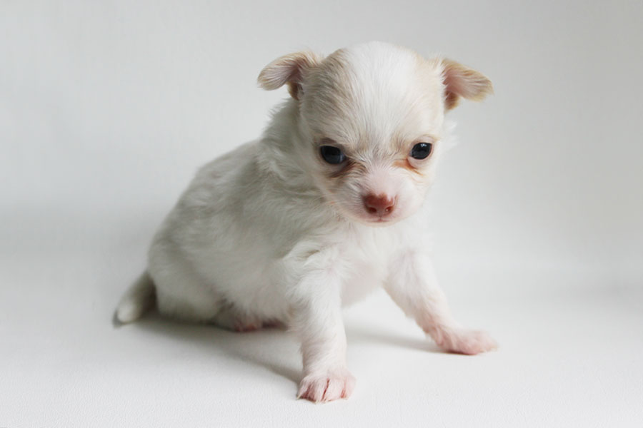 Rudy - 4 Weeks Old – Weight 15.1 ozs