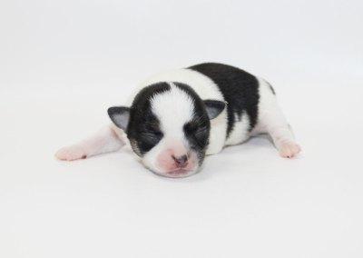Kenny - 1 Week Old 7.9 ozs