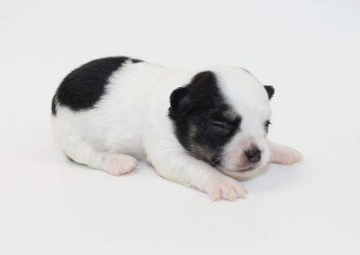 Harrison - 2 Weeks Old - 12.9 ounces