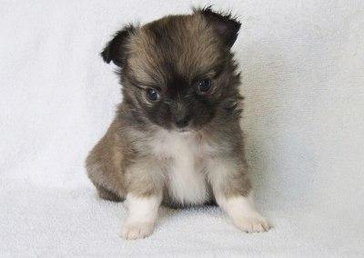 Bella - 5 Weeks Old - Weight 1 lb 1 oz