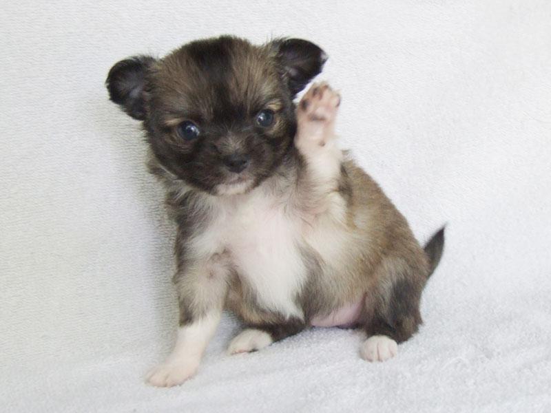 Bella - 4 Weeks Old