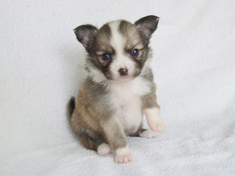 Glori - 4 Weeks Old