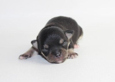 Bolt- 1 Week Old - Weight 5 ozs