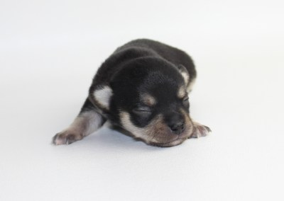 Bolt- 2 Weeks Old - Weight 9.6 ozs