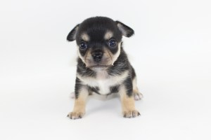 Bolt- 4 Weeks Old - Weight 1 lb 4.9 ozs