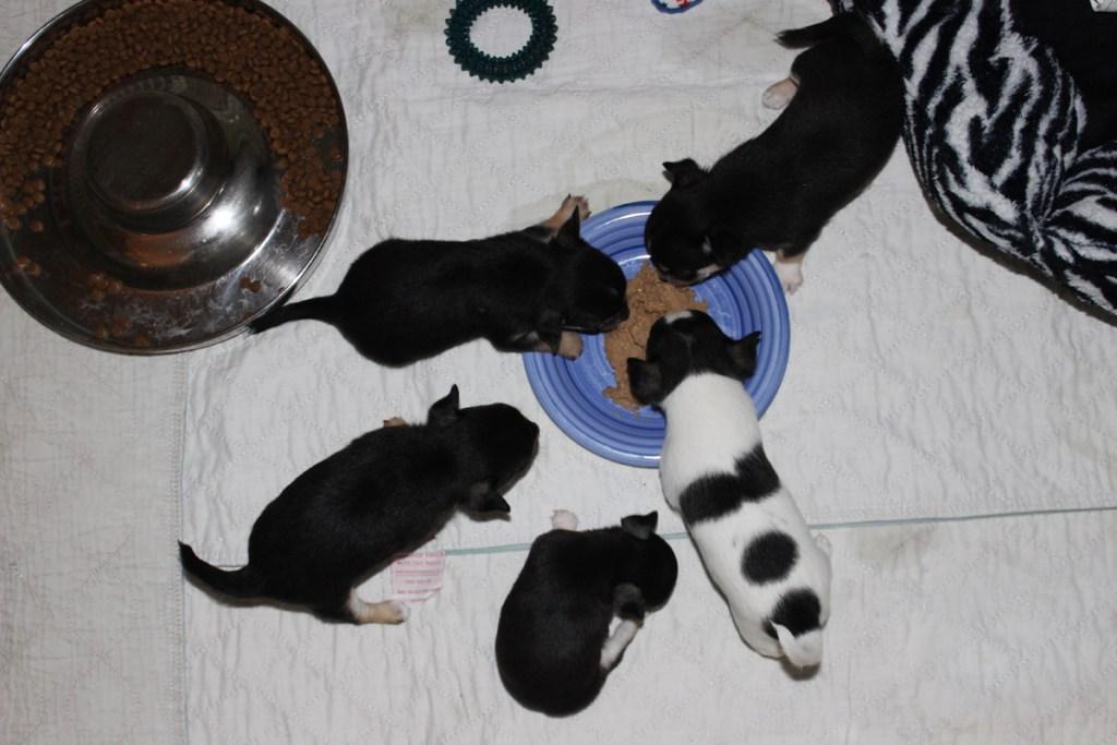 their feast