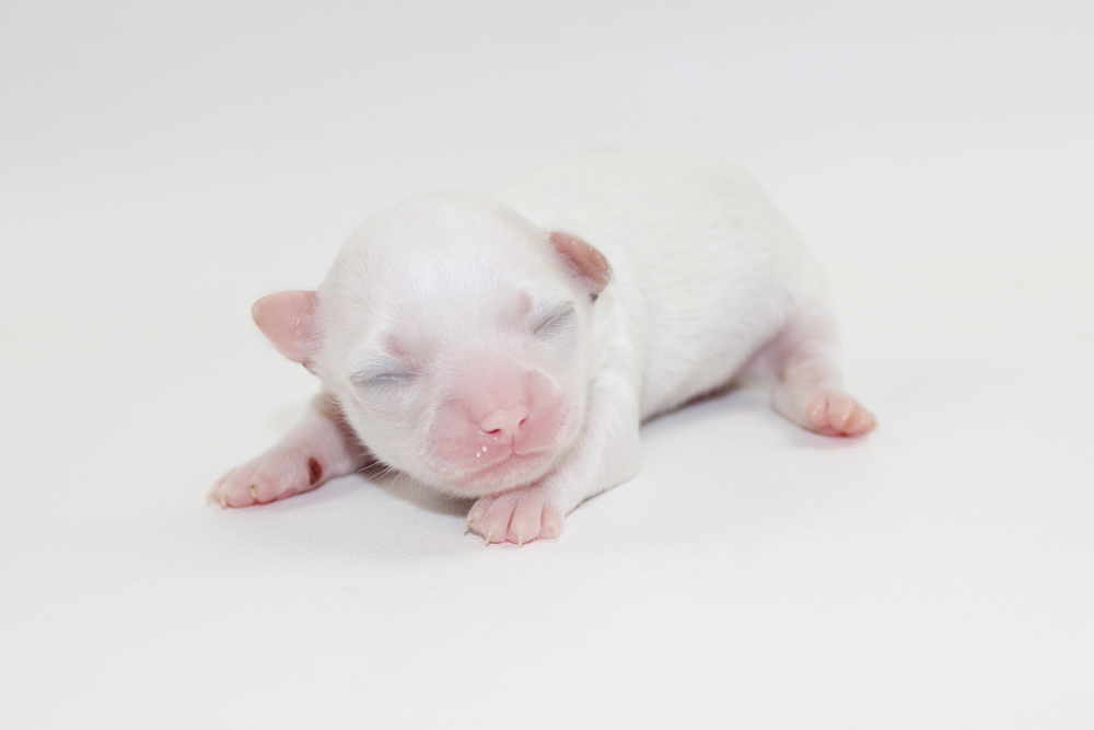 Thunder - 1 Week Old - Weight 9.7 ozs