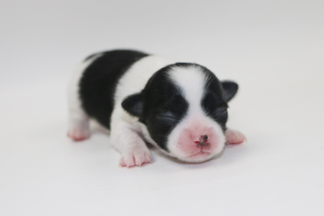Him - 1 Week Old- Weight 7.9 ozs
