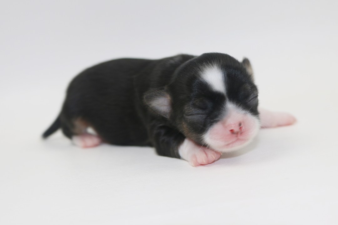 Tini - 1 Week Old- Weight 6.5 ozs