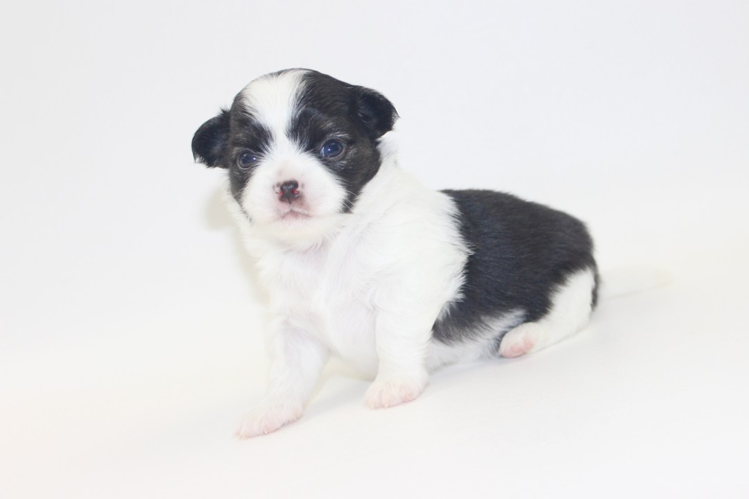 Him - 3 Weeks Old- Weight 1 lb 3 ozs