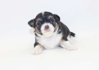 Tini - 4 Weeks Old- Weight 1 lb 3.8 ozs