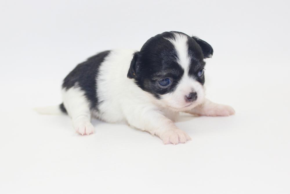 Bella - 3 Weeks - Weight 14 ozs