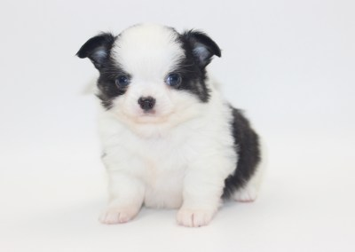 Vamp - 5 Weeks Old - Weight 1 lb 5.2 ozs